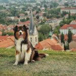 Mit Hund in Slowenien – 20 Tipps